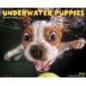 Deals List: Underwater Puppies 2015 Wall Calendar