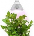 Deals List: Sandalwood LED Plant Grow Light for Hydroponic Garden and Greenhouse, 12W, E27 Socket, 3 Bands