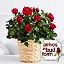 Deals List: Valentine's Day Spectacular Bouquet (3 Stems of Lilies + 10 Blue Iris)