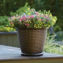 "Deals List: Delray Plants Mass Cane in 10"" Pot"