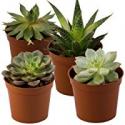 Deals List: Seville Farms SUC001 Mini Succulent (4 Pack), Green