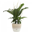 Deals List: Save on Indoor Plants and Plantcare