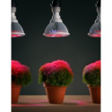 Deals List: 3-Pk Sandalwood 12W LED Plant Grow Light for Hydroponic Garden