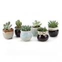 Deals List: 6-Pack T4U 2.5 Inch Ceramic Succulent Pot