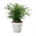 Deals List: Bloem Eco Whimsical 7.5-inch Pot Planter