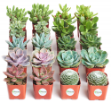 Deals List: Shop Succulents | Assorted Collection of Live Succulent Plants, Hand Selected Variety Pack of Mini Succulents | Collection of 20