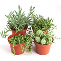 Deals List: Shop Succulents | Unique Collection of Live Plants, Hand Selected Variety Pack of Mini Succulents, Pack of 20