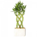 Deals List: Save 20% on Live House Plants