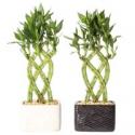 Deals List: Delray Plants Aloe Vera in 4-inch Pot