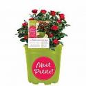Deals List: Plants, Flowers, Planters Sale
