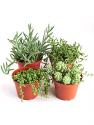 Deals List: 20% off Plants and Succulents from Shop Succulents
