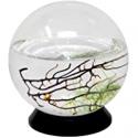 Deals List: EcoSphere Closed Aquatic Ecosystem Small Sphere