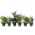 Deals List: 6-Pk Costa Farms Clean Air-O2 For You Live House Plant Collection